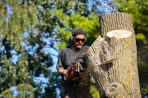 Tree Lopping and Tree Removal Noosaville