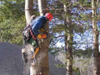 Tree Lopping and Tree Removal Maroochy Hinterland