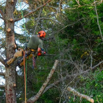 Tree Lopping and Tree Removal Pelican Waters