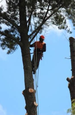 Tree Lopping and Tree Removal Golden Beach