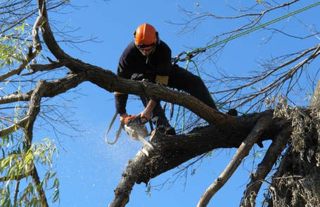 Tree Lopping and Tree Removal Buddina