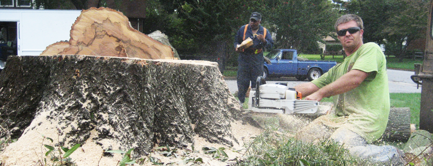 Tree Removal Coolum