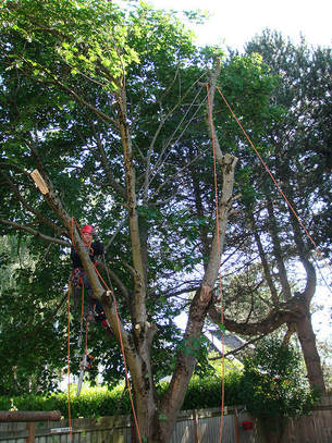 Tree Lopping Mount Coolum