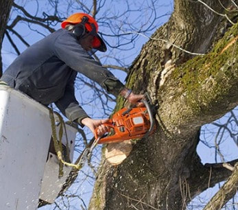 Tree Lopping and Tree Removal Currimundi