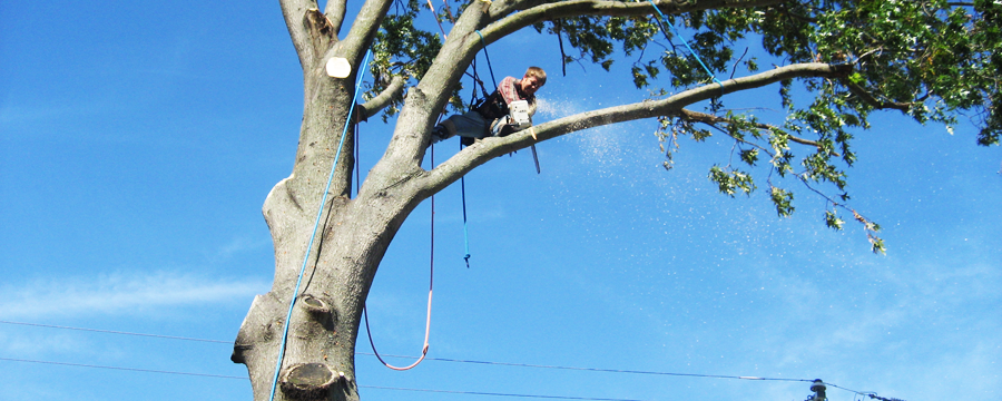 Tree removal Caloundra