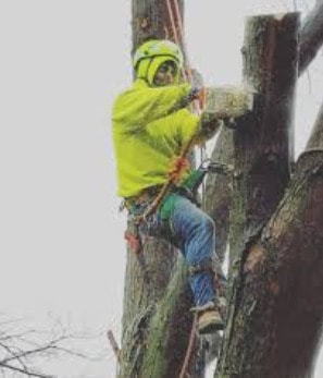 Tree Lopping and Tree Removal Wurtulla